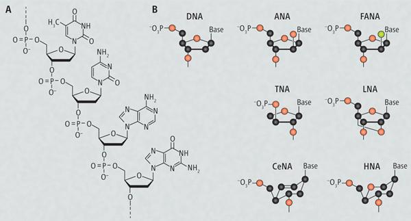 Искусственные полимеры могут хранить генетическую информацию