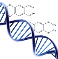 Investigation of the interaction of DNA with synthetic derivatives of papaverine (27.10.15)